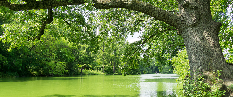 tree-algal-bloom-iStock487274834-1440x600